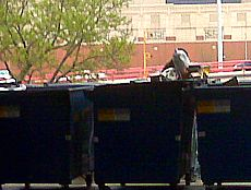 Chicago Poor Dumpster Diving1.jpg