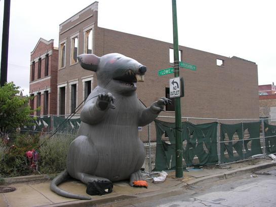 Big Rat in Bridgeport.jpg